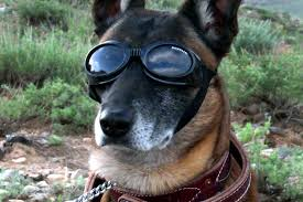 Penny Pincher Journal Dog Sunglasses Buying Guide Find The