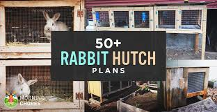 50 diy rabbit hutch plans to get you