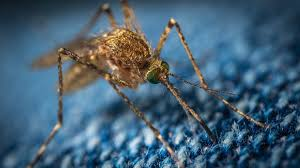Do Mosquitoes Come To Light How To Find And Kill That Single Mosquito Buzzing Around