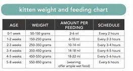 Kitten Feeding Chart Image Result For Kitten Weight And Feeding Chart Kitten