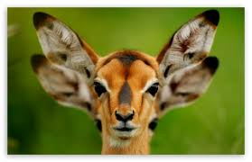 hd wallpaper widescreen animals. Plain Widescreen Download Wild Animals HD Wallpaper Intended Hd Widescreen E