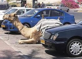 是誰開駱駝來大潤發呀??? 趣圖---趣味圖片照片