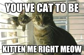 you've cat to be kitten me right meow - Misc - quickmeme via Relatably.com