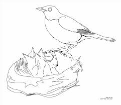 Small Picture Printable Robin Coloring Page Robin Bird Coloring Pages Design