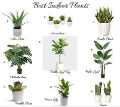 top-indoor-house-plants.png