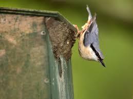 where to position a bird nesting box saga