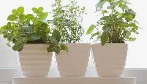 growing an herb garden epicurious com