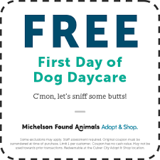 Free Day Care Free Dog Daycare Adopt Shop Culver City Ca