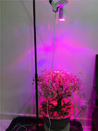 Horticultural Led Grow Lights Walmart What Are Grow Lights For Indoor Plants Grow Lights Best