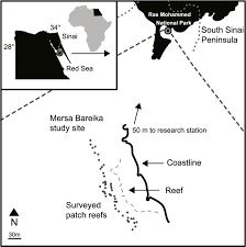 study site map map of the patch reefs and study area at mersa bareika