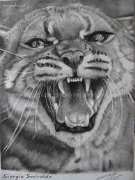 Disegno Gatto A Matita Portalebambini