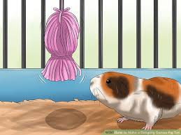 image titled make a dangling guinea pig toy step 7