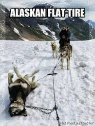 Image result for iditarod quotes