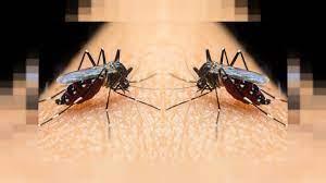 Agresif' kaplan sivrisinekleri nerelerde etkin, korunma yolları neler? |