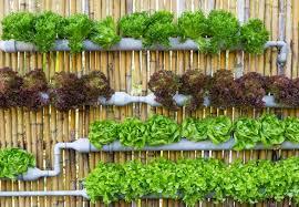 Small Picture Vertical Vegetable Gardening erikhanseninfo