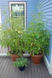 18 plants grown in containers nc