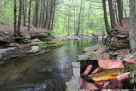 Loyalsock Creek Hatch Chart Few Hatchery Brook Trout Genes Present In Pa Watershed Wild