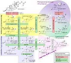 Предменструальный синдром Википедия Стероидогенез биологический процесс характеризующийся образованием стероидов из холестерина и превращением в другие стероиды