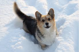 doge snow gif. Simple Doge Doge In Snow For Snow Gif E