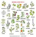 medicinal plants and herbs