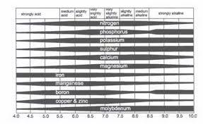 X Nutrients Ph Up