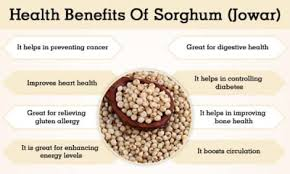 Sorghum Jowar Benefits And Its Side Effects Lybrate
