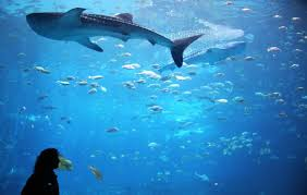 here s a list of the best marine animal jobs learn about being an aquarist including job duties salary and more