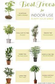 Best 25+ Plants indoor ideas on Pinterest | Plant, House plants .