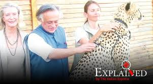 Explained: To import <b>cheetahs</b>, or not to - The <b>Indian</b> Express