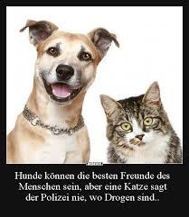 Hunde Können Die Besten Freunde Des Menschen Sein Lustige Bilder