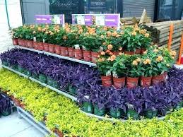 home depot plants winter plant covers for winter home depot plant covers for winter home depot home depot plants winter