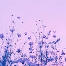 Ghim của Aubrey Rice trên aesthetic | Hình ảnh, Phong cảnh, Nhiếp ảnh