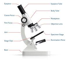 Parts Of The Microscope Parts Of The Optical Microscope And Its Functions Life Persona