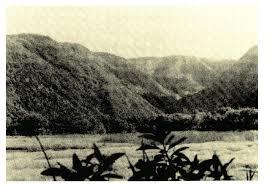 hawaiian adze. hawaiian adze production and distribution s