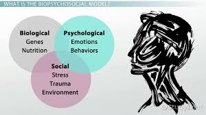 what is the biopsychosocial model definition example video  what is the biopsychosocial model definition example video lesson transcript com
