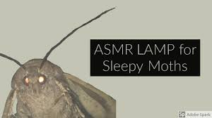 Asmr Lamp For Sleepy Moths Memes Tapping