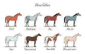 Set Of Horse Color Chart Equine Coat Colors With Text