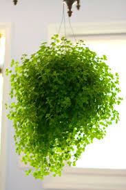 ... Large-large Size of Calm Hanging Plants On In Ideas About Hanging Plants  On Pinterest ...