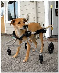 how to make a dog wheelchair for front legs