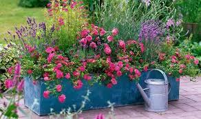 Alan Titchmarsh On Colourful Garden Plant Containers  Garden Container Garden Ideas Uk