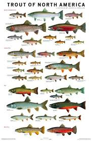 Tuned Up Custom Rods Chart Trout Of North America Fish Fish Chart Freshwater Fish