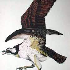 Bird of Prey - Osprey by Leann Saylors - bird - Emery's Fine Art Gallery