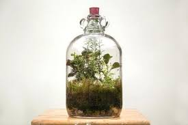 self sustaining ecosystem in a bottle self sustaining terrariums tom create beautiful designs that water themselves