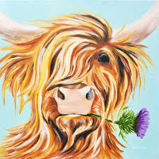 highland cattle scottish thistle cow