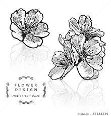 きれい 綺麗 花 サクランボのイラスト素材 Pixta