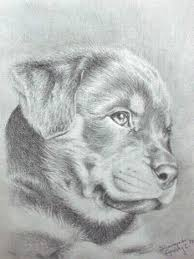 Small Picture 96 best Animal images on Pinterest Drawings Animal drawings and