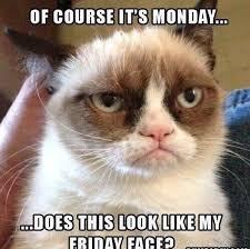 Monday Quotes Funny Gorgeous Cool Monday Funny Meme Monday Quotes Happy Monday Motivational Funny
