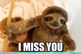 i miss you baby sloth memes | quickmeme via Relatably.com