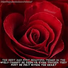 Beautiful Red Rose Quotes Best Of Rose Roses Rosa Red Rose Quote