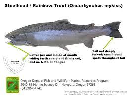 Ocean Salmon Identification